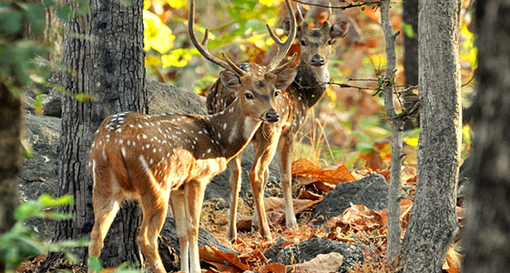 pench-national-park2